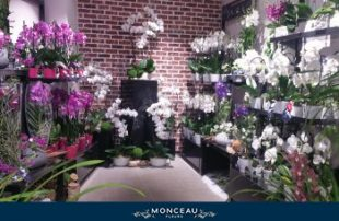 Monceau Fleurs Paris Convention